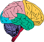 Multicolored diagram of a brain